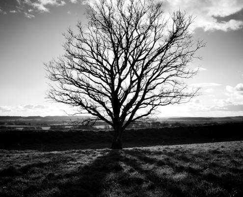 Backlit Tree- 365 Day 006