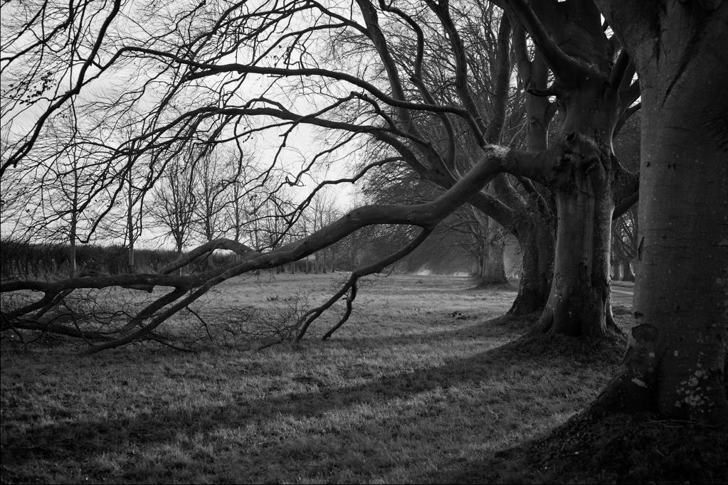 Broken Branch - 365 Day 010